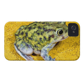 A spadefoot toad Case-Mate iPhone 4 cases