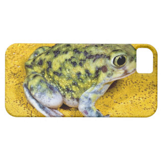 A spadefoot toad iPhone 5 case
