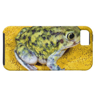A spadefoot toad iPhone 5 cases