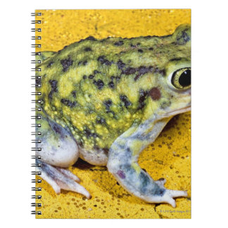 A spadefoot toad notebooks