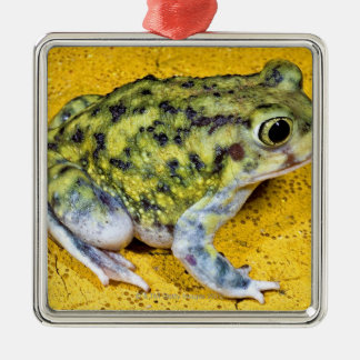 A spadefoot toad Silver-Colored square decoration