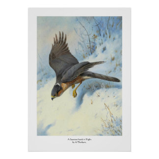 A Sparrow-hawk in Flight Poster