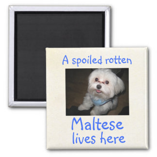 A Spoiled Rotten Pet Lives Here Magnet