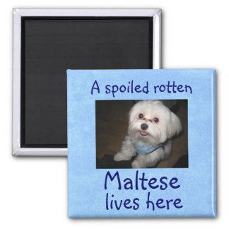 A Spoiled Rotten Pet Lives Here Magnet-Boy Square Magnet