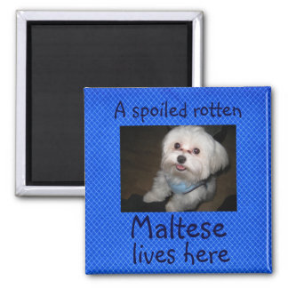 A Spoiled Rotten Pet Lives Here Magnet-Boy