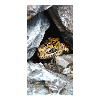 A spotted Frog hides among the rocks in a yard Personalized Photo Card