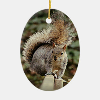 A Squirrels Tail Ceramic Oval Decoration