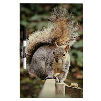 A Squirrels Tail Dry Erase Board