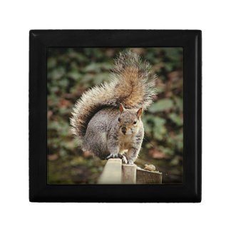 A Squirrels Tail Gift Box