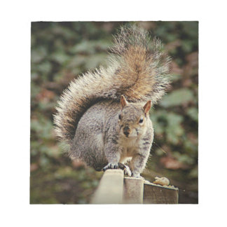A Squirrels Tail Notepad