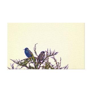 A Starling Bird Couple Canvas Prints
