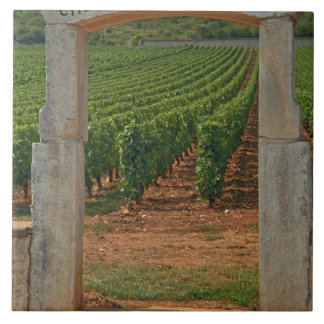 A stone portico to the vineyard tile