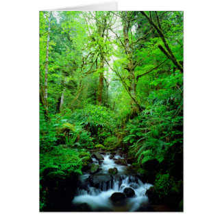 A stream in an old-growth forest card