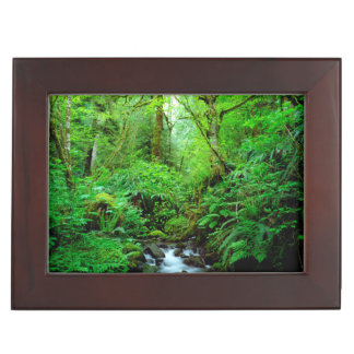 A stream in an old-growth forest keepsake box