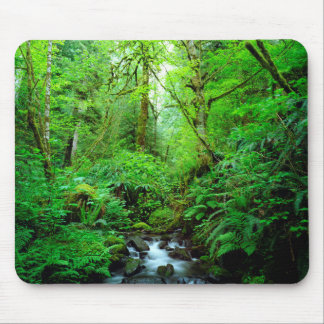 A stream in an old-growth forest mouse mat