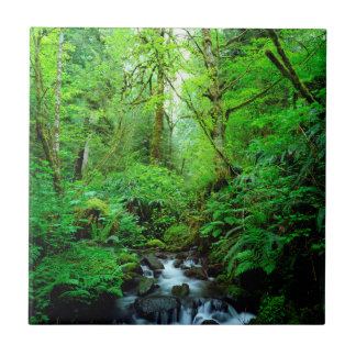 A stream in an old-growth forest tile
