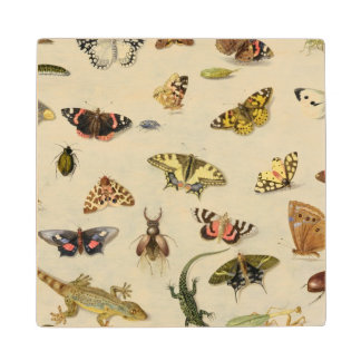 A Study of insects Maple Wood Coaster