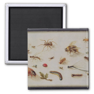 A Study of Insects Square Magnet