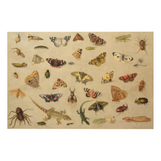 A Study of insects Wood Wall Decor