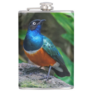 A Stunning African Superb Starling Flask