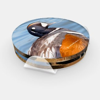 A Stunning Quintet of Colorful Ducks (I) Coaster Set