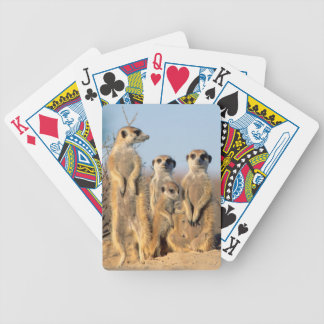 A Suricate family sunning themselves at their den Bicycle Playing Cards
