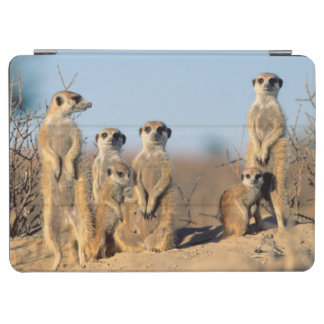 A Suricate family sunning themselves at their den iPad Air Cover