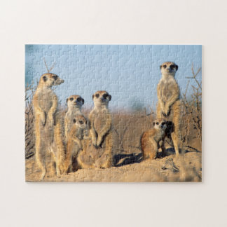 A Suricate family sunning themselves at their den Jigsaw Puzzle