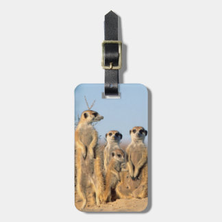 A Suricate family sunning themselves at their den Luggage Tag