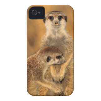 A Suricate mother and young interacting Case-Mate iPhone 4 Case