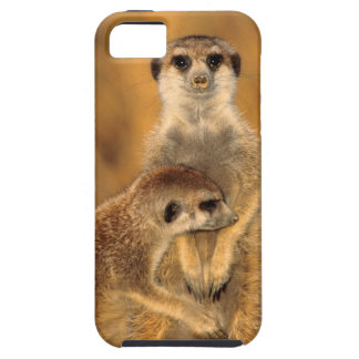 A Suricate mother and young interacting iPhone 5 Covers
