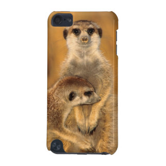 A Suricate mother and young interacting iPod Touch (5th Generation) Cases