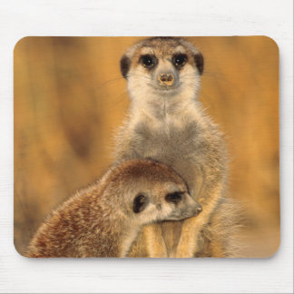 A Suricate mother and young interacting Mouse Mat