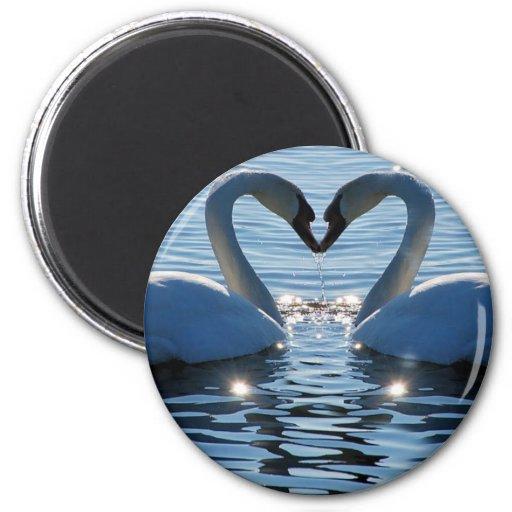 A Swan Heart Kiss, Reflections of Love Fridge Magnet