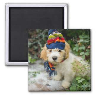 A Sweet Cavachon Puppy In A Winter Hat And Scarf Square Magnet