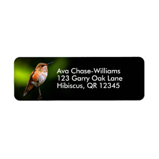 A Sweet Rufous Hummingbird Poses on the Fruit Tree Return Address Label