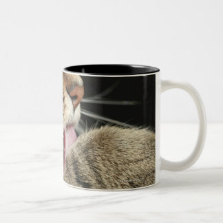 A tabby cat licking his paw. Two-Tone coffee mug
