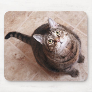 A tabby cat looking up mouse pad
