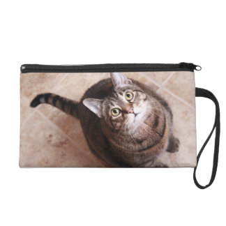A tabby cat looking up wristlet