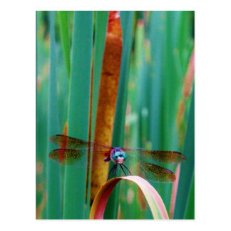 A teal Eyed Dragonfly with cattails Postcard