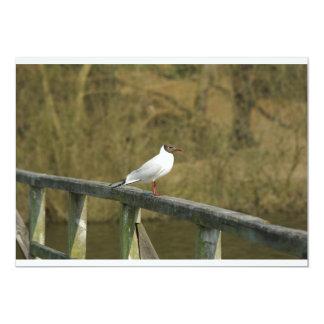 A tern - invitation