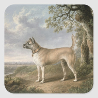 A Terrier on a path in a wooded landscape Square Sticker