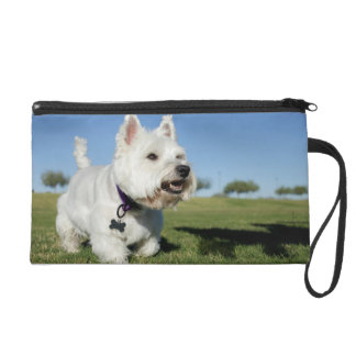 A Terrier playing out in the field Wristlet