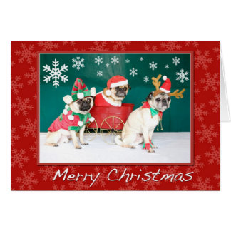 A Three Pug Christmas Card