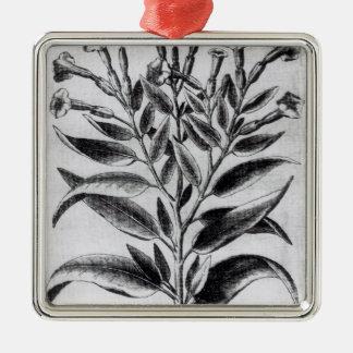 A Tobacco Plant, 1622 Christmas Ornament