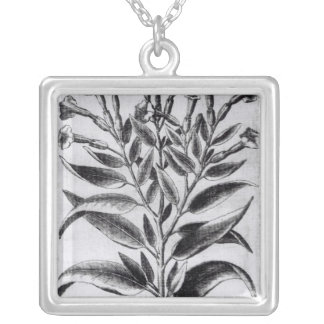 A Tobacco Plant, 1622 Silver Plated Necklace