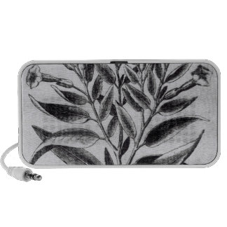 A Tobacco Plant, 1622 Portable Speakers