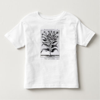 A Tobacco Plant, 1622 Toddler T-Shirt