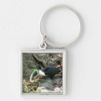 A Toucan Perches on tree roots on the forest floor Silver-Colored Square Key Ring