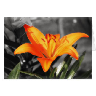 A Touch of Colour (Lily) Card
